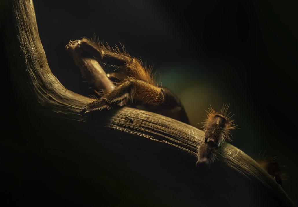Makrofoto einer Spinne, die auf einen Ast klettert