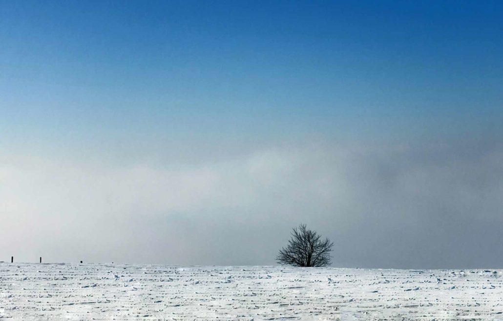 Schneelandschaft fotografie baum