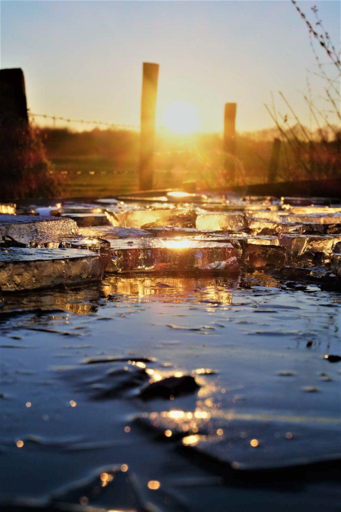 Eischollen in einer Kuhtränke vor der Sonne