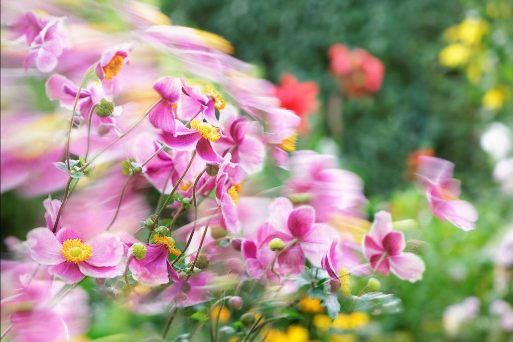 Composite-Blumenfotografie