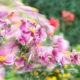 Blumenbewegt