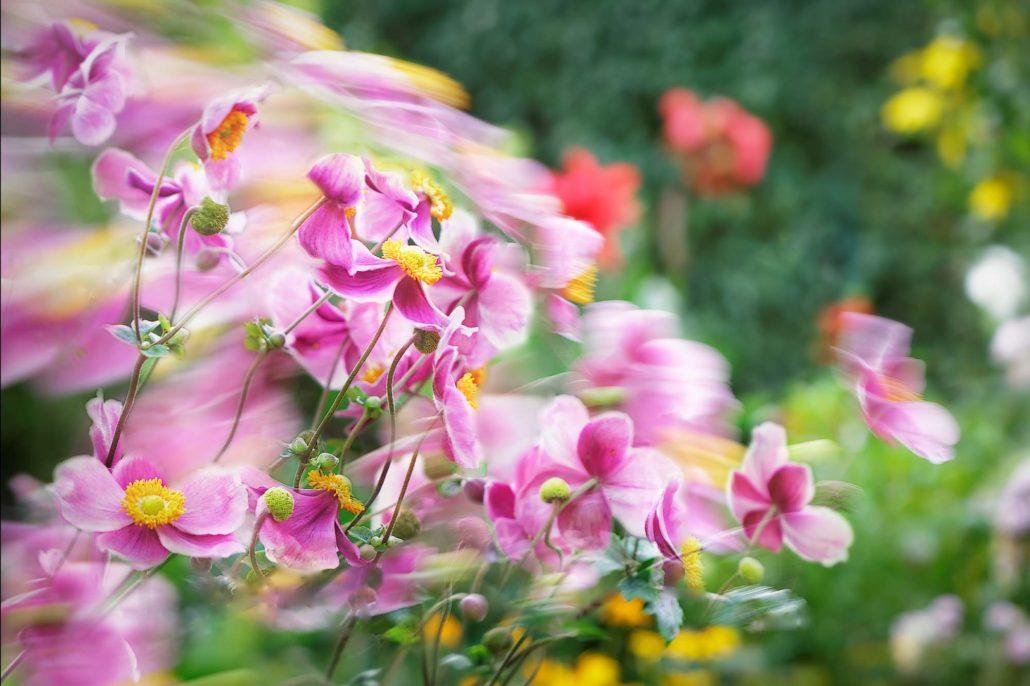 Blumen in Bewegung - Composite-Foto