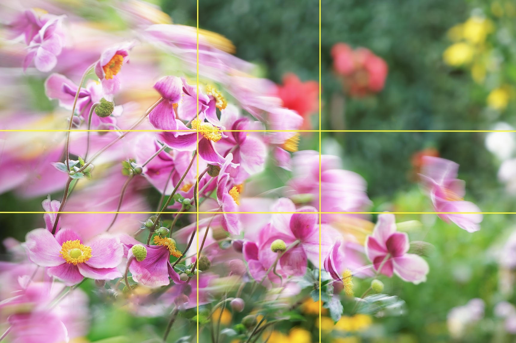 Blüten im Wind-Foto-Composite