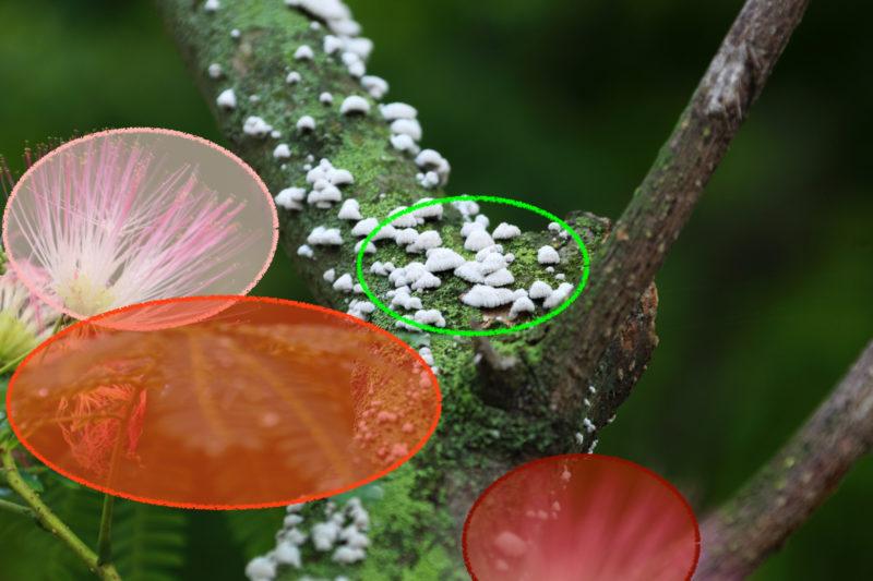 Telefotografie Blüte Ebenen der Freistellung