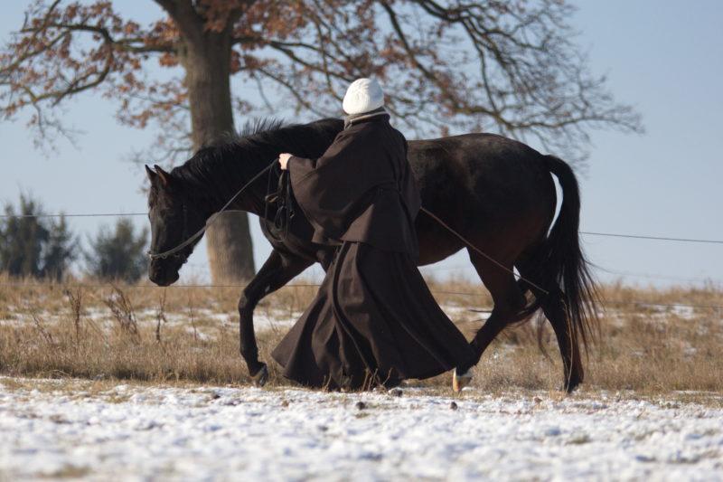 Pferd an der Longierleine