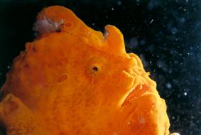 underwateruniverse-01.jpg