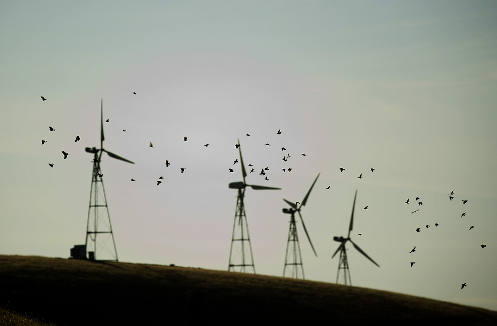 Vögel und Windräder, Altamont Pass, Kalifornien USA (AP Photo/Noah Berger)