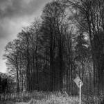 waldfotografie3-Gebrochenes-Idyll