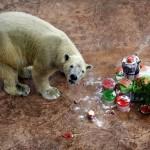 SINGAPORE POLAR BEAR BIRTHDAY