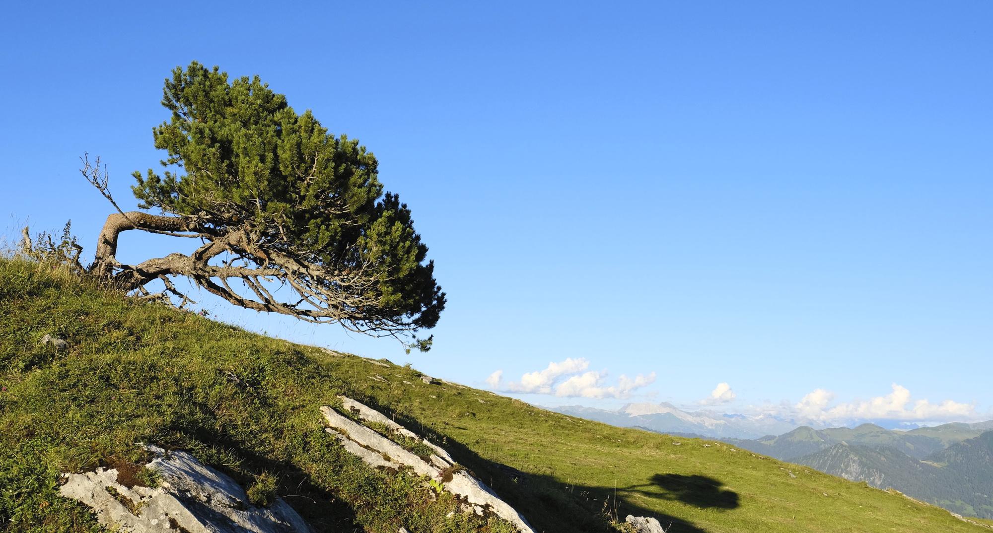 Baum-mit-Aussicht