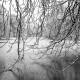 winter, schnee, äste, bäume, teich, eis, gefrohren, kalt, schwarz, weiß