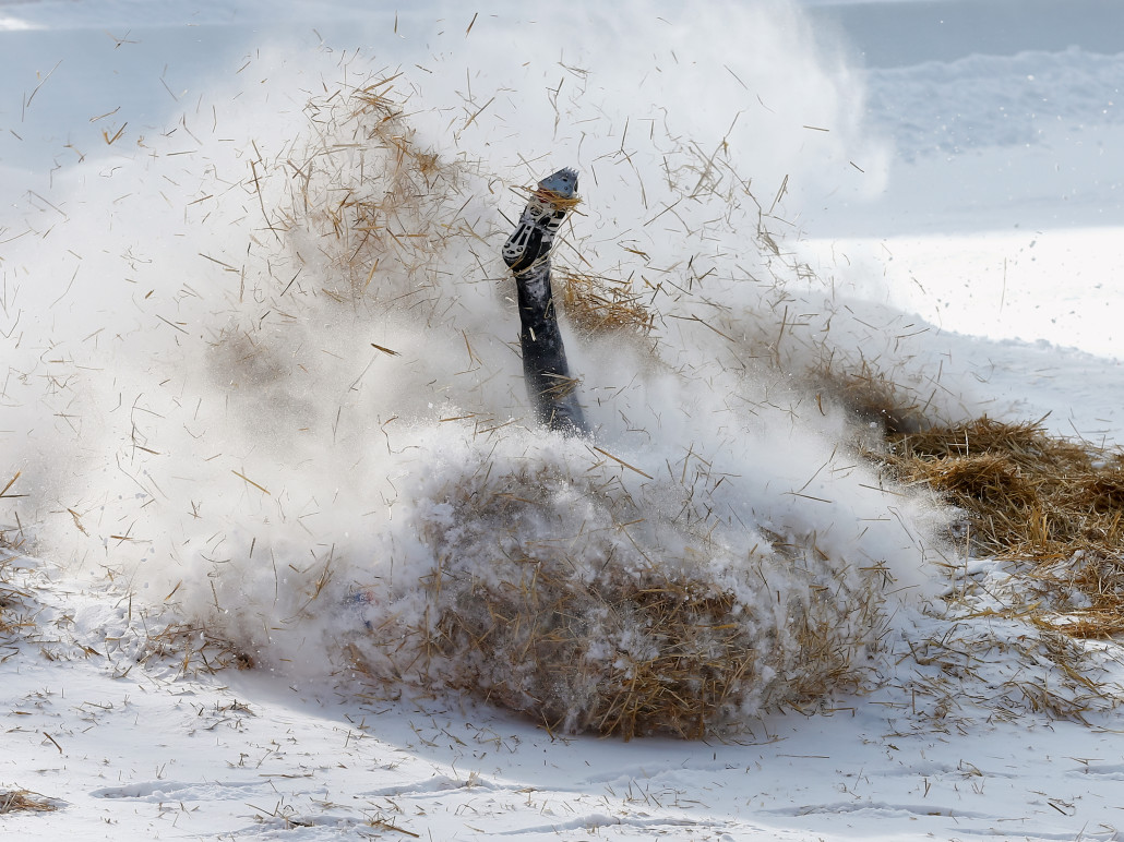 An unidentified rider falls into straw as he fails to pass Shuttlcock Corner during a practice at the natural ice run of the Cresta Run in the Swiss mountain resort of St. Moritz February 6, 2015. The private St. Moritz Tobogganing Club (SMTC), with its world-wide membership, was founded in St Moritz 1887. The natural ice run starts in St. Moritz and winds its way down a valley to what was the village of Cresta, but which now forms part of the village Celerina. It is approximately 3/4 mile (1,212m) in length with a drop of 514 feet (157m) and has to be built new every year from snow and water. REUTERS/Arnd Wiegmann (SWITZERLAND)