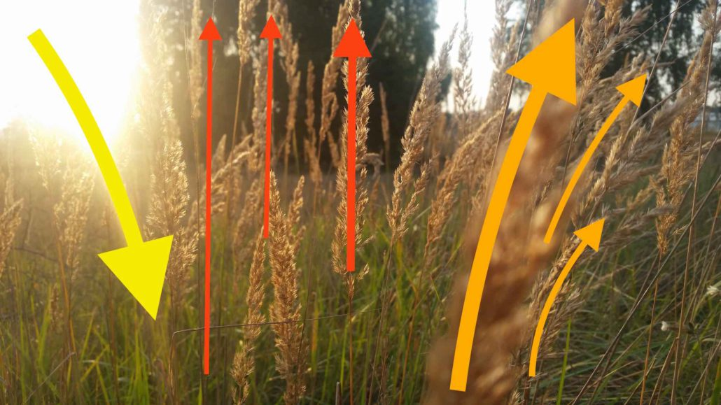 Handyfoto mit Vektoren-Anzeige