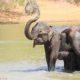 Fotografie von Elefanten am Wasserloch