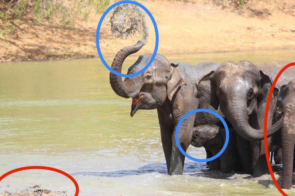 Qualitäten und Mängel in der Elefantenfotografie