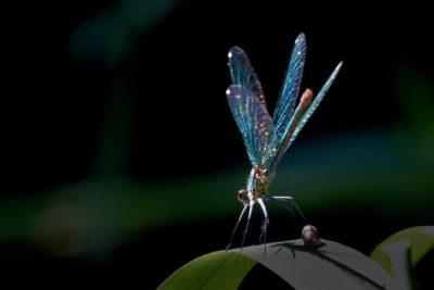 Libellenbild