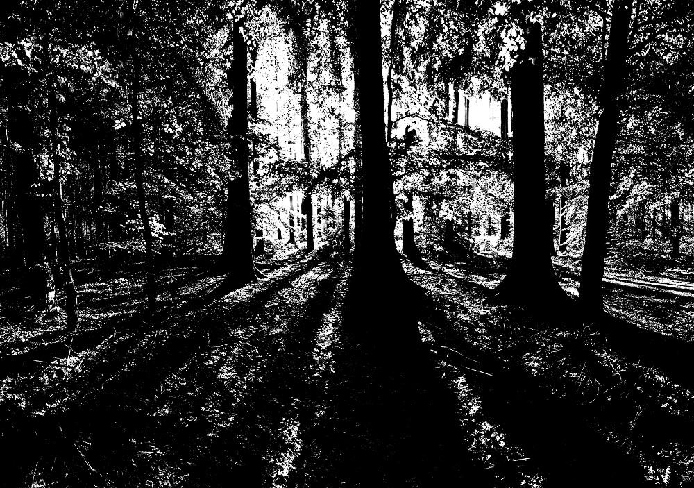 Abstraktes Waldfoto
