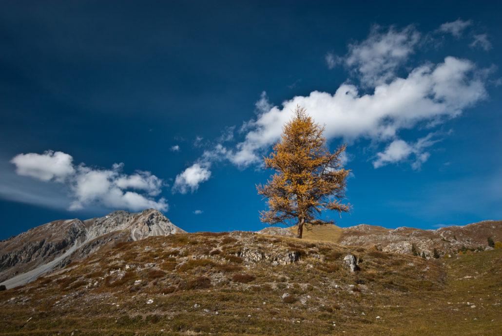 Der Baum steht isoliert in der Landschaft, es entsteht keine Verbindung.