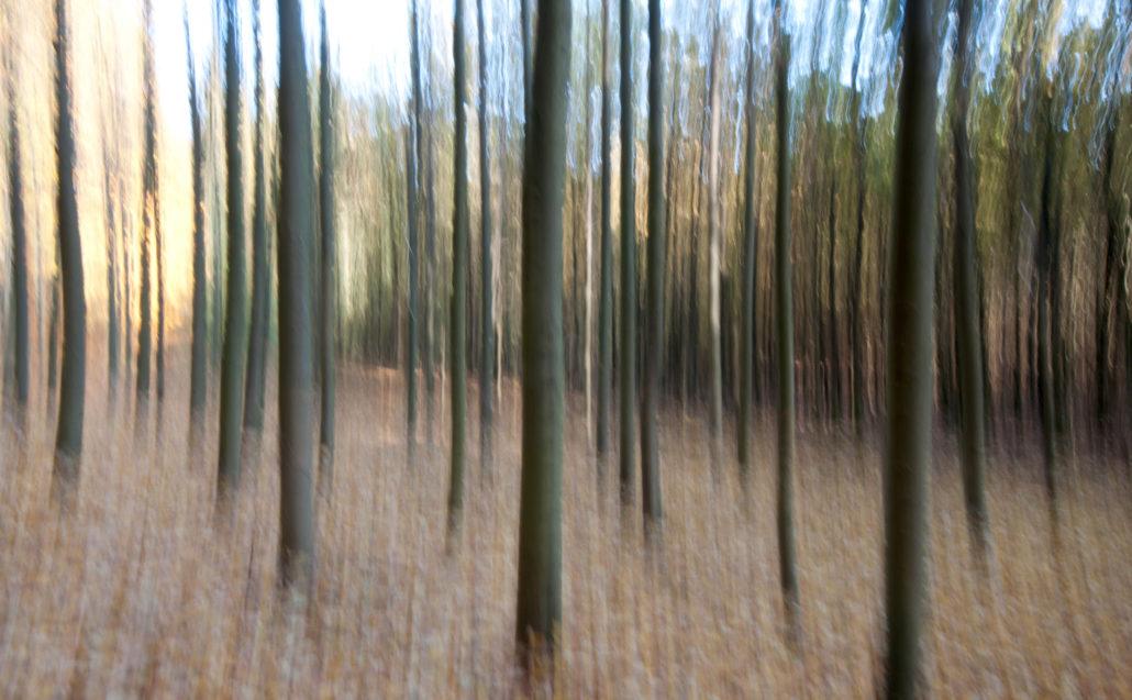 Bewegter Wald © Torsten Jäger