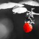 Color-Key Aufnahme einer Himbeere