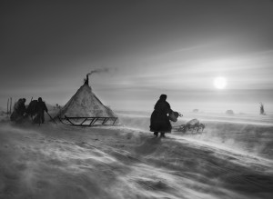 North of the Ob River, about 100 kilometers inside the Yamal peninsula, fierce winds keep even daytime temperatures low. When the weather is particularly hostile, the Nenets and their reindeer may spend several days in the same place, doing repair work on sledges and reindeer skins to keep busy. The deeper they move into the Arctic Circle, the less vegetation is to be found. Inside the Arctic Circle. Yamal peninsula, Siberia. 2011.