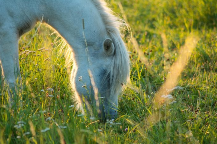 Pferdefoto im Gegenlicht