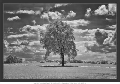 Sony NEX-7 infrared with Zeiss OTUS 1.4/85mm
